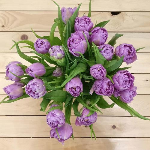 Devotion Tulips | Buy Flowers in Dubai UAE | Gifts