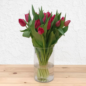 Surrender Tulips | Buy Flowers in Dubai UAE | Gifts