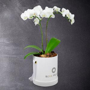 Add Truth by Rose Privee | Buy Flowers in Dubai UAE | Gifts