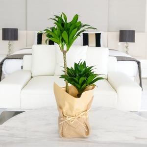 Desert Mirage | Buy Flowers in Dubai UAE | Gifts