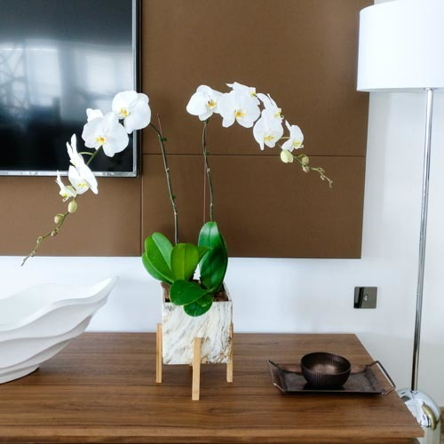 Orchids Garden | Buy Flowers in Dubai UAE | Gifts perfect for Women's Day