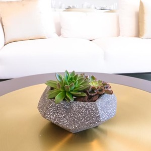 Succulent Stone | Buy Flowers in Dubai UAE | Gifts
