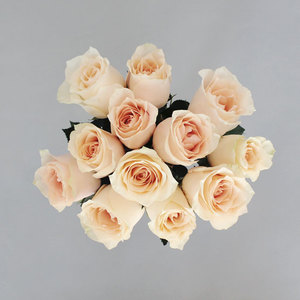 Rose Harmony | Buy Flowers in Dubai UAE | Gifts