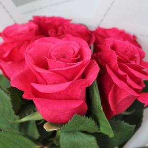 Six Stolen Kisses | Buy Flowers in Dubai UAE | Gifts