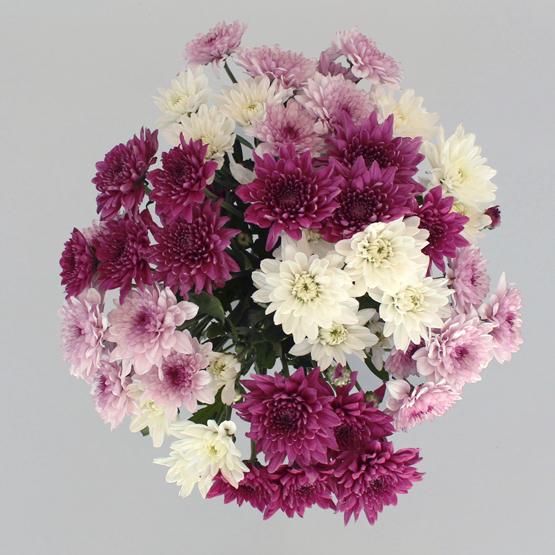 Bloom   Buy Flowers in Dubai UAE