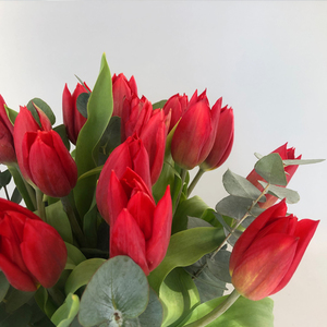 Tulipa Kiss | Buy Flowers in Dubai UAE | Gifts