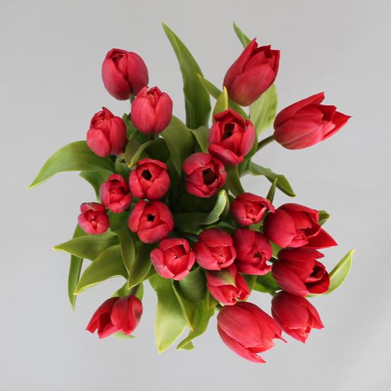 Firecracker Tulips | Buy Flowers in Dubai UAE | Gifts