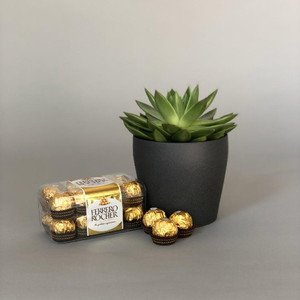 Succulent Pot & Chocolates | Buy Plants in Dubai UAE | Gifts