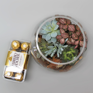 Succulent Bowl & Chocolates | Buy Plants in Dubai UAE | Gifts