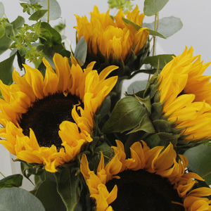 Summer's here! Package  Buy Flowers in Dubai UAE   Gifts