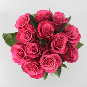Pink Floyd | Buy Flowers in Dubai UAE | Gifts
