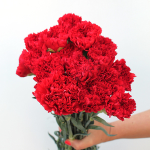 15 Stems of Carnation | True love | Buy Flowers in Dubai UAE | Gifts