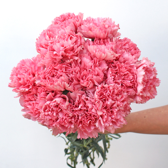 15 Stems of Carnation | admiration | Buy Flowers in Dubai UAE | Gifts