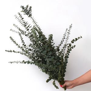 Eucluptus | Baby blue | Buy Flowers in Dubai UAE | Gifts