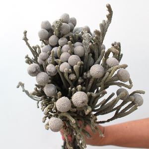 10 Stems of Brunia | Grey  | Buy Flowers in Dubai UAE | Gifts