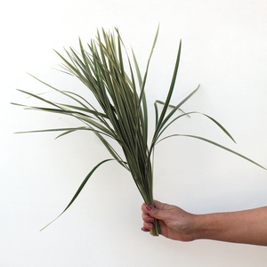 50 Stems of  T- Grass | Buy Flowers in Dubai UAE | Gifts
