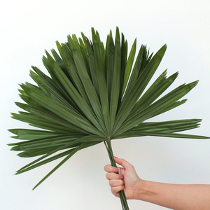 10 Stems of Raphis Leaves | Buy Flowers in Dubai UAE | Gifts