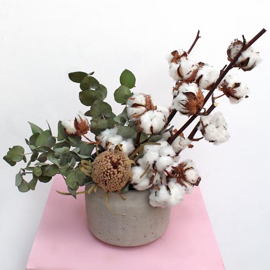 Long Lasting Cotton Tale Dried Buy Flowers In Dubai Uae Gifts