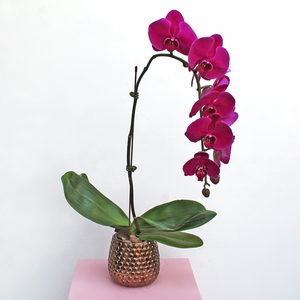 Phalaenopsis Orchid Beauty | Buy Flowers in Dubai UAE | Gifts