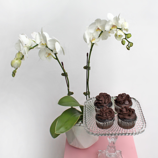 Midi Orchids White Package | Chocolate Package  | Buy Flowers in Dubai UAE | Gifts