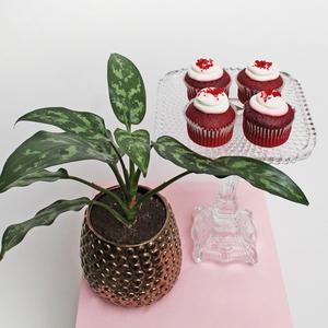 Aglaonema Ever Green | Red Velvet  Package | Buy Flowers in Dubai UAE | Gifts