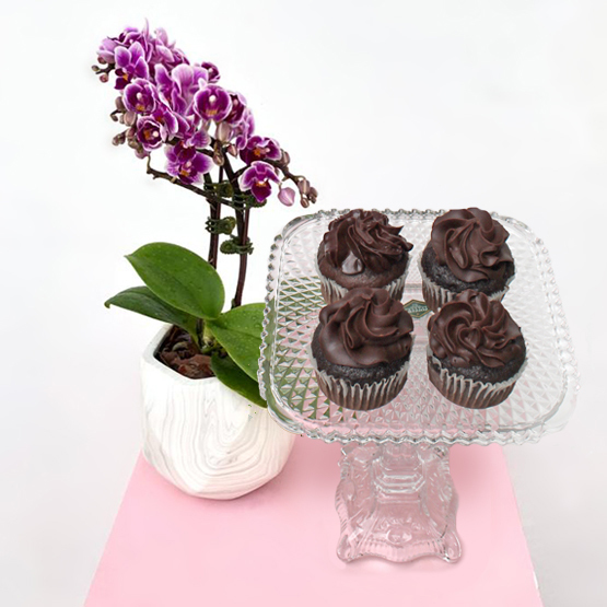 Mini Orchids Purple | Chocolate Package | Buy Flowers in Dubai UAE | Gifts