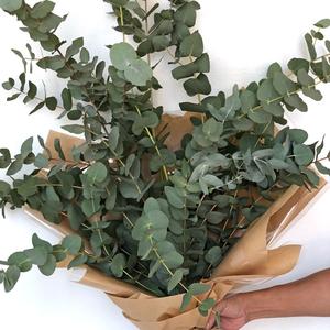 Bunch of Eucalyptus Leaves in Dubai
