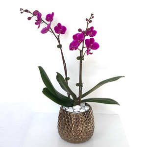 Mini Purple Orchid Golden Vase | Buy Orchids in Dubai UAE | Gifts