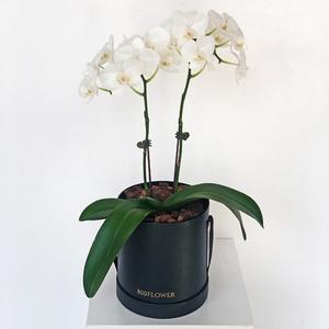 Harmonious Orchid Arrangement | Buy Orchids in Dubai UAE | Gifts
